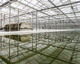 Open Pond Phytoplankton Greenhouse