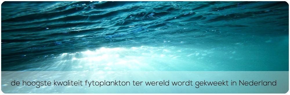 hoogste kwaliteit fytoplankton